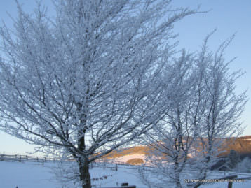 Winterimpressionen